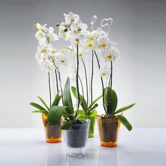 Ghiveci pentru orhidee, Vulcano
